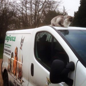 cat sitting on roof of dog fence van