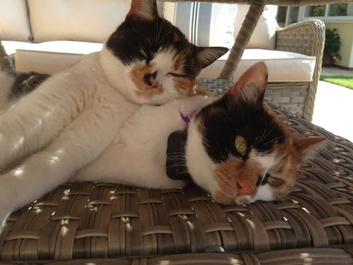 Poppy and Missy from Sussex