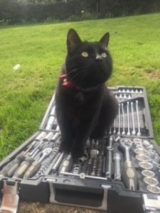 black cat contained with invisible cat fence